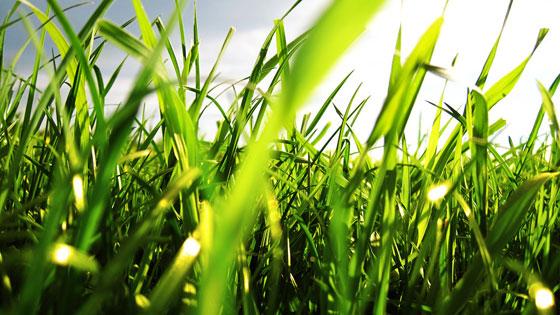 2011-early-summer-5wallpaper-grass