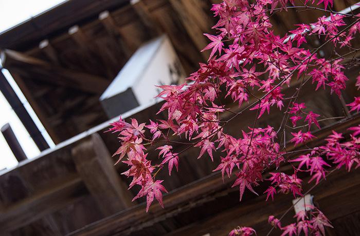 spirited-away-shibu-onsen-momiji-2