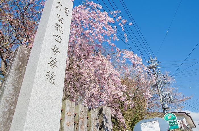 spirited-away-shibu-onsen-sakura